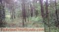 Terreno en venta en montaña de bosque con vista al lago de Valle de Bravo y a Cerro Gordo.